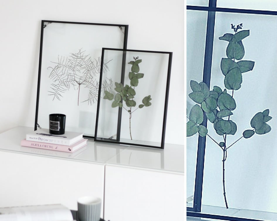 DIY-Floating-Frame-Herbarium